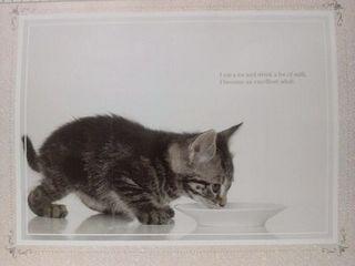 100均の猫カレンダー(1月)